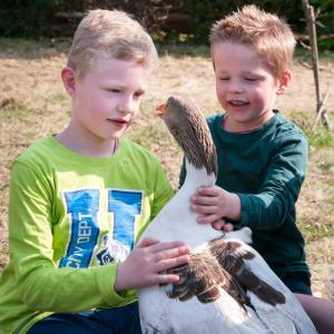 Kinder und Tiere V