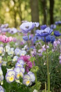 bunter Mix von Frühjahrsblumen