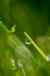 morgens im Gras I